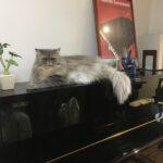 そろそろピアノ弾くつもり、本気で・・・
